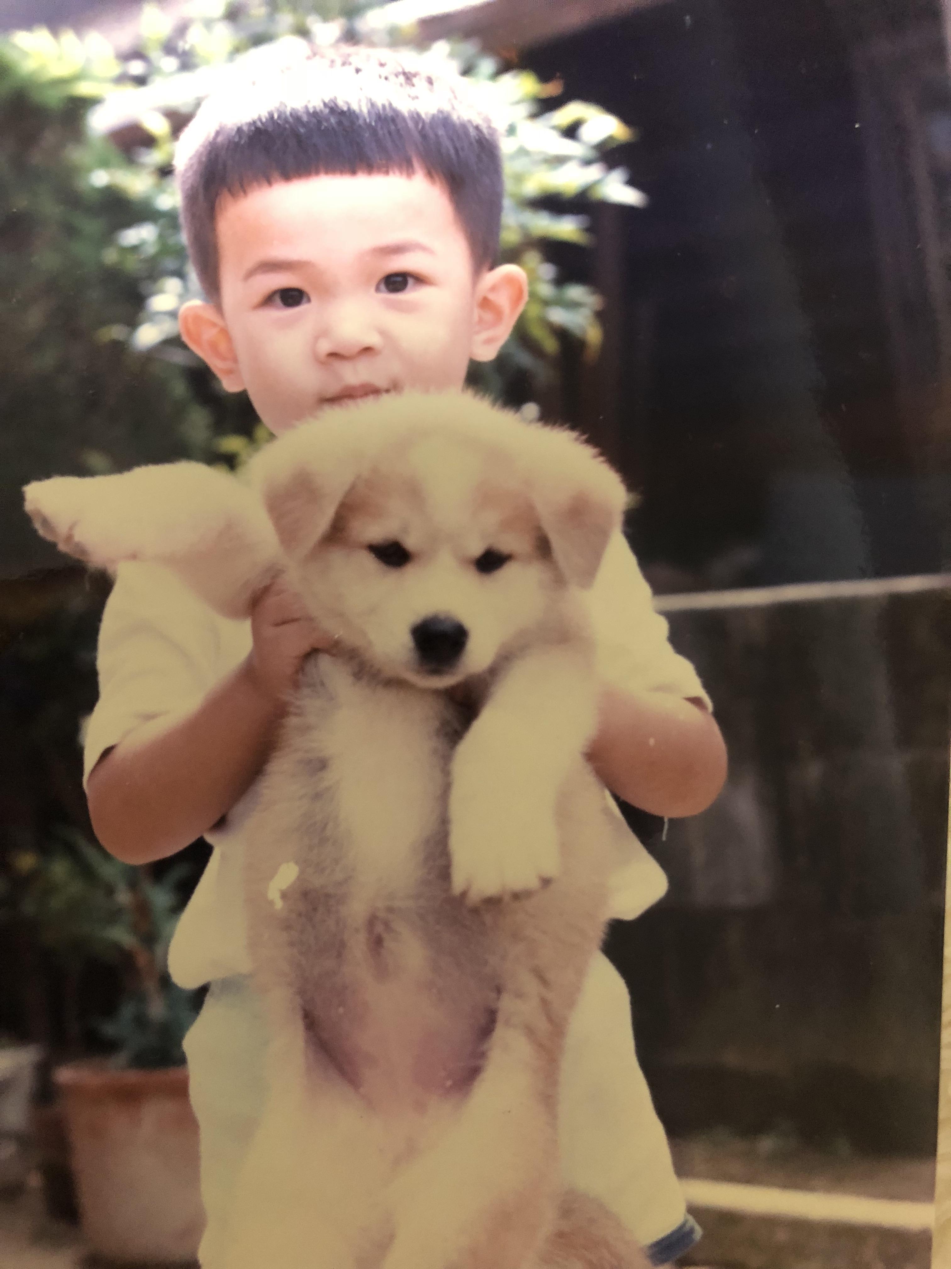 画像:秋田犬を飼いたい!
