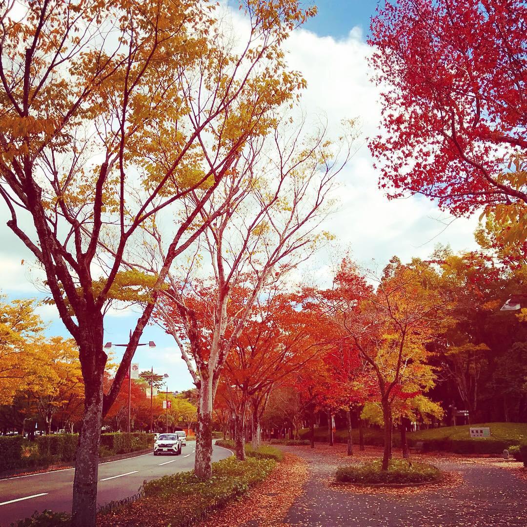 画像:秋色