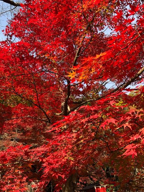 画像:秋の深まりを楽しむ