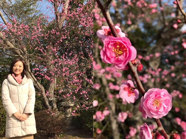 画像:春を探しに