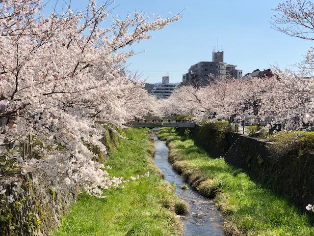 画像:平成最後の桜 その2