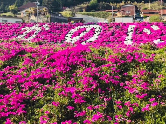 画像:花も団子も 週末周南旅
