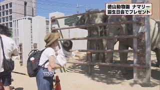 画像:山口・徳山動物園のゾウ、ナマリーの誕生会