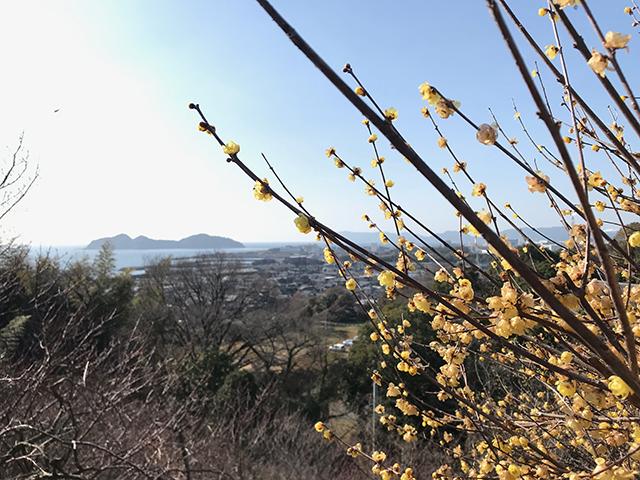 画像:周南日記【62】・春はすぐそこ?