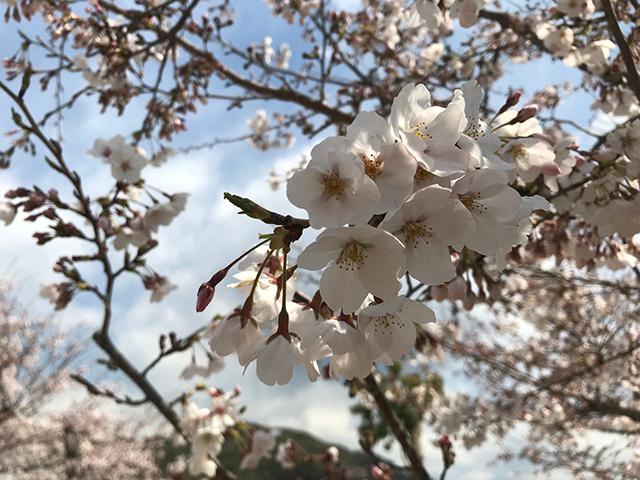 画像:周南日記【65】・別れの季節