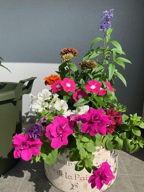 画像:花と野菜