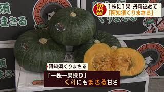 画像:山口・かぼちゃ「阿知須くりまさる」出荷