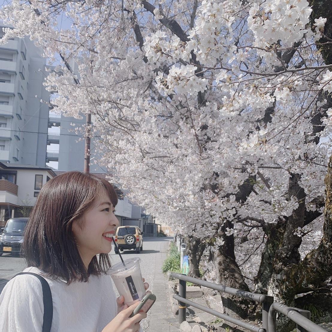 画像:桜咲く!桜咲け!