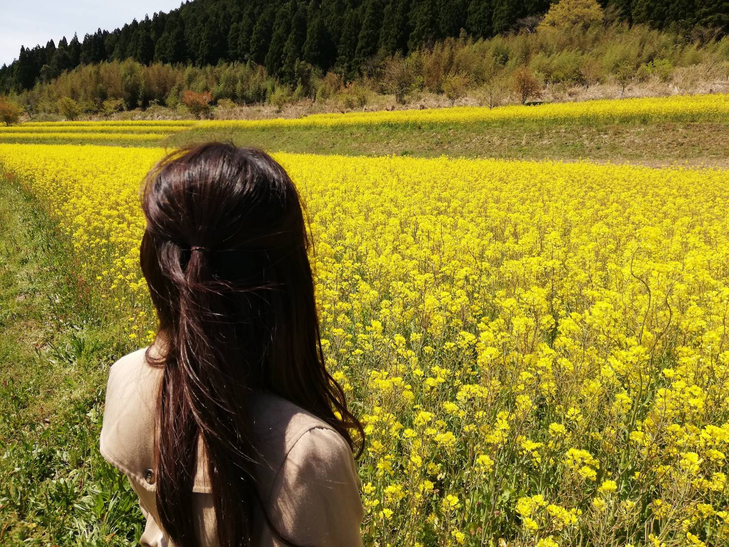 画像:鮮やかな春