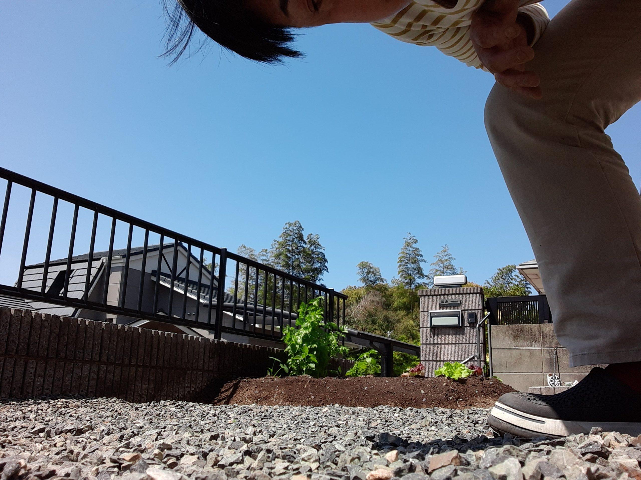 画像:再開!癒しの家庭菜園