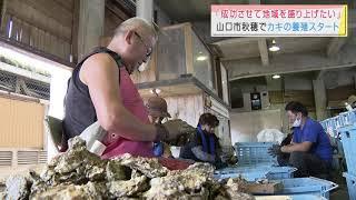 画像:【山口】クルマエビに続け!牡蠣養殖がスタート